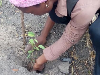 Lutte contre la désertification et le changement ...
