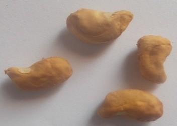 Noyaux (endocarpe + graine)